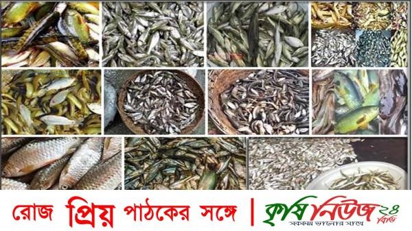 সকল বিলুপ্তপ্রায় মাছকে পর্যাক্রমে খাবার টেবিলে ফিরিয়ে আনতে হবে -বিএফআরআই মহাপরিচালক