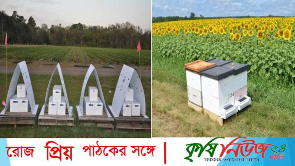 """"""" কৃষি অন্বেষণ""""পর্ব-২৮# বিষয়ঃ আগামীর কৃষিঃ পরিবেশবান্ধব বিভিটি প্রযুক্তি (Bee Vectoring Technology, BVT) 🐝🐝🐝"""