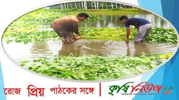 রংপুরে সোনালী পাটে ফিরছে কৃষকের সুদিন